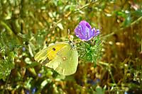 Butterfly113898_1280